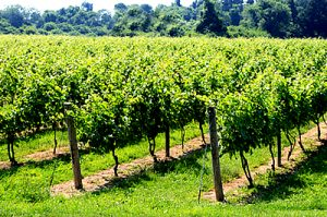 long-island-wineries